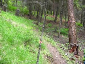 Cardinal Creek Trail