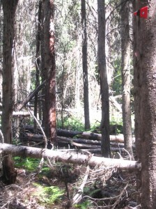 Barriers on the High Rim Trail - may be cleaned out now.