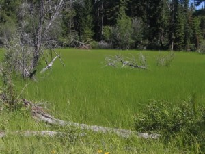 Swampy Meadow on the High Rim Trail