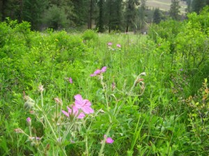 Flowers in Kalamalka Lake Provincial Park