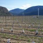 Covert Farms to Vineyard