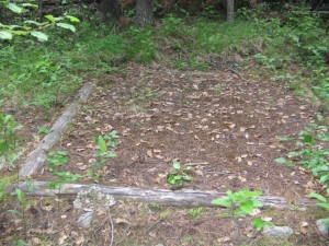 Of the six tent sites, one can be used with no brush removal