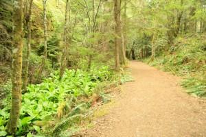 Lantern plants grow huge beside the pathway.