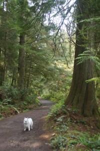 Pike Road hike in East Sooke, BC.