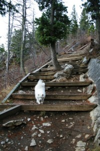 Large, steep steps along the switchbacks on the Bears Hump Trail.